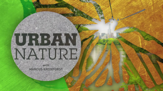 Urban Nature: 'Chicago's Crossroads'