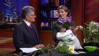 Eliza Fournier: How to Garden When the Weather Gets Weird