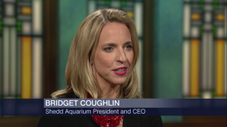 Bridget Coughlin Dives in as the Shedd's New CEO