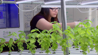 Students Give Schurz Food Science Lab a Green Thumbs Up