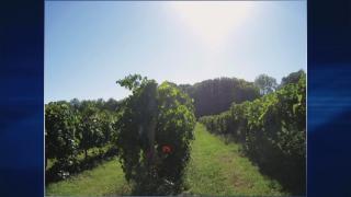 July 29, 2014-Illinois Wines