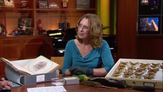 Notebaert Nature Museum Dusts Off Rare Specimens