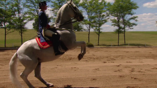 Lipizzan Horses a Mix of Athlete and Artist