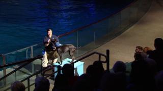 Rescue Dog Finds New Home at Shedd Aquarium