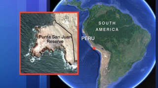Peru's Protected Treasure: Reserve is Key for Conservation