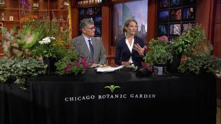 Eliza Fournier Shares Midsummer Gardening Tips