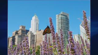 May 7, 2014 - Prairie Perennials Inspire Home Gardens