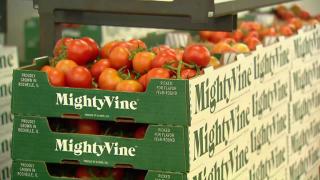 Innovation, Sustainability Key to Future of Illinois Farming