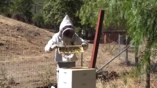 Local Beekeepers Guard Against Fatal Diseases