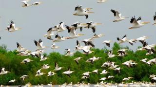 May 15, 2014-Migratory Birds in Flight