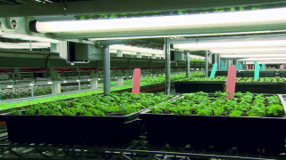 June 23, 2014 - Vertical Farming's Rise in Chicago