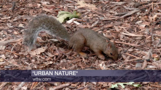 Wildlife Meets City Life in New WTTW 'Urban Nature' Series