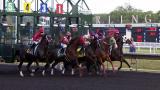 The starting gate at Arlington International Racecourse. (WTTW News)