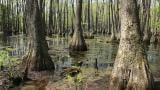 A swamp at Round Pond Nature Preserve. (Courtesy Illinois Nature Preserves Commission)