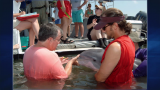 September 25, 2013 - Leading Dolphin Researcher