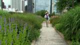 July 17, 2014 - Lurie Garden in Summer