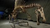 Scientists Speak about Spinosaurus
