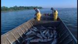 Asian Carp Control