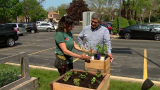 Strategies for Container Gardening in Chicago