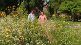 Urban Nature: 'The Intricate Ecology … of Vacant Lots'