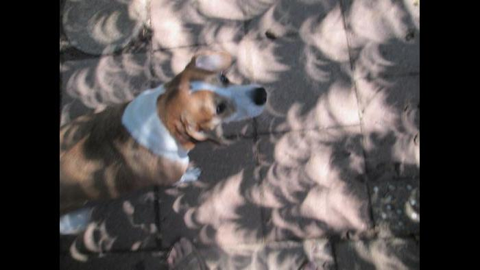 A friend's patio and puppy dog during the eclipse (Submitted by: lavonne patrick)