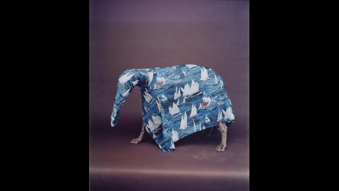 William Wegman, Caribbean Ant Eater, 1988