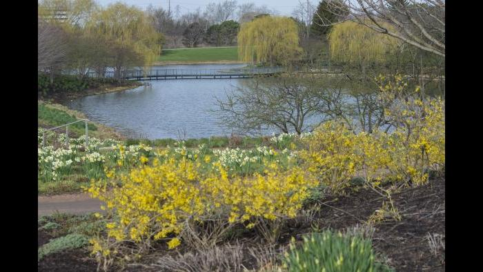 (Courtesy of the Chicago Botanic Garden)