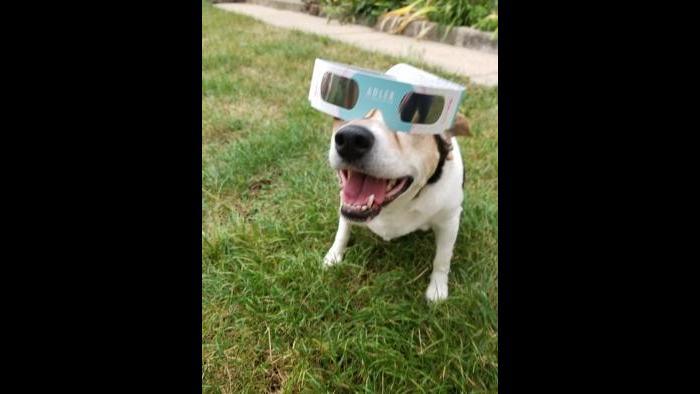 Dog looking at eclipse (Submitted by: Jose and Nury)