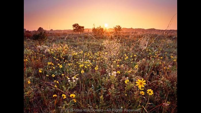 Where And When To See The Best Chicago Area Wildflowers Chicago