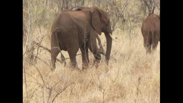 Photo taken during African safari by Terri Colby.