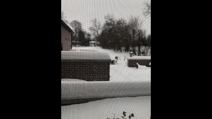 Cold backyard (Submitted by Aimee Pacente)