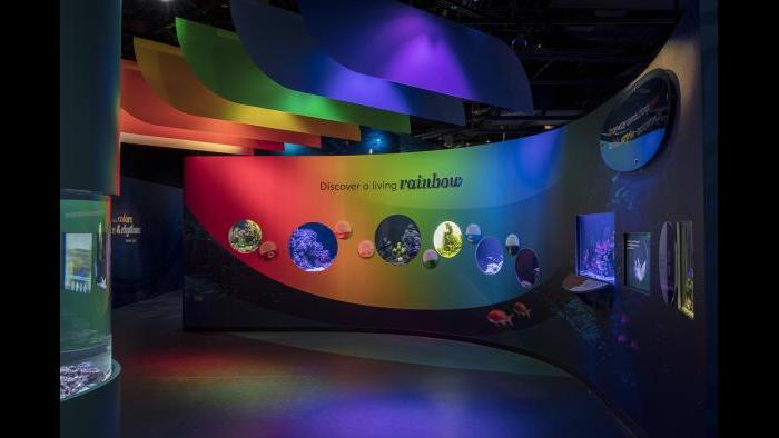 "Multicolored lights drench guests while displays interpret how colors benefit aquatic life in ""Underwater Beauty."" (Courtesy of Shedd Aquarium)"