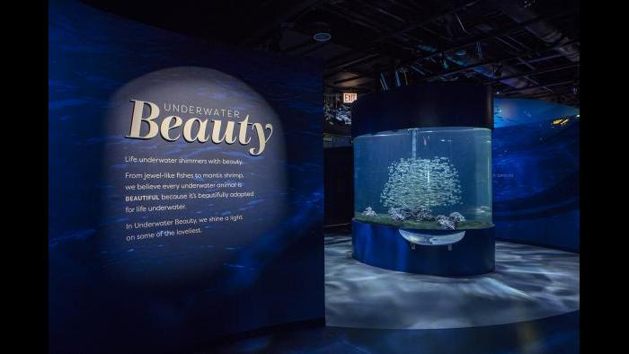 "Guests embark on their ""Underwater Beauty"" journey in this first room. (Courtesy of Shedd Aquarium)"