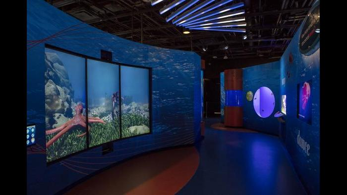 "In ""Rhythms,"" guests become part of the exhibit as they mimic and control the motions of animated animals. (Courtesy of Shedd Aquarium)"