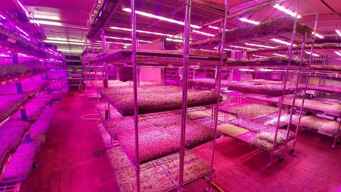 Closed Loop's indoor farm at The Plant. (Courtesy of Closed Loop Farms)