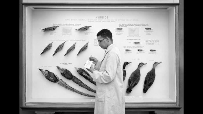Carl Cotton (Courtesy of the Field Museum)