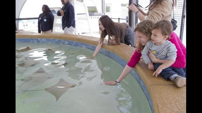 (Courtesy of Shedd Aquarium)