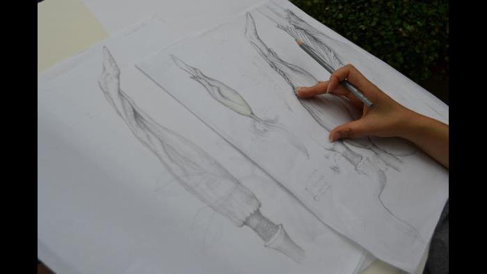Botanical artist Heeyoung Kim sketching Alice (Photo / Chloe Riley)