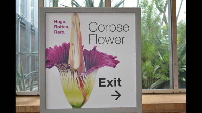 Sign advertising Alice the Corpse Flower (Photo / Chloe Riley)