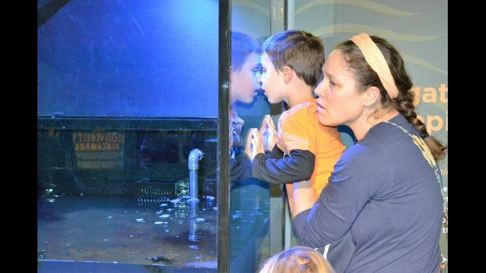 Visitors at Peggy Notebaert Nature Museum watch alligator snapping turtle Patsy McNasty in her new tank. (Alex Ruppenthal / Chicago Tonight)
