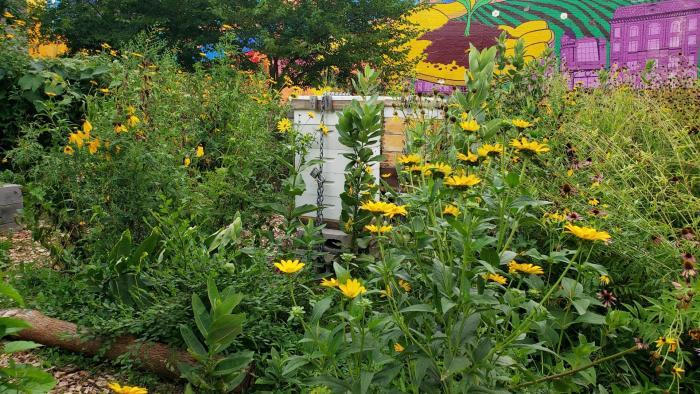 The garden's beehive is surrounded by plenty of flowers for bees to dine on. (Courtesy of El Paseo Community Garden)