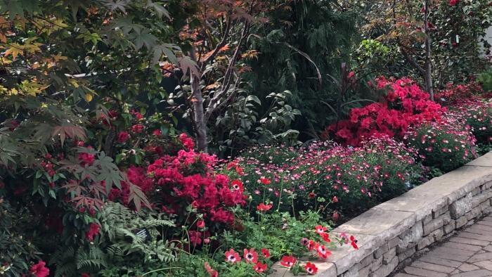 "Garfield Park Conservatory's ""Saturation"" exhibit. (Patty Wetli / WTTW News)"