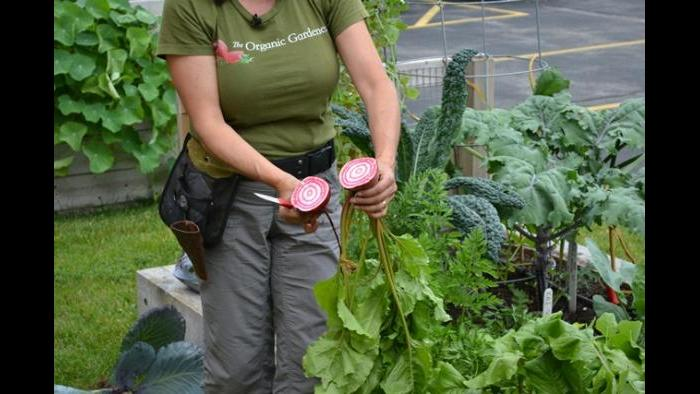 Jeanne Nolan shows Eddie Arruza why the Chioggia beet is known as the candy beet.