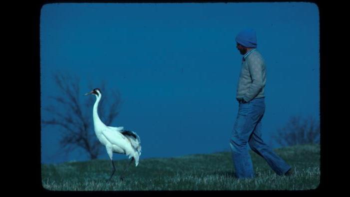 George Archibald and Tex (Photo/International Crane Foundation)