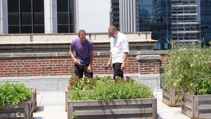 Healthy Soil Compost, helping a chef's garden grow. (Alexandra Silets / Chicago Tonight)