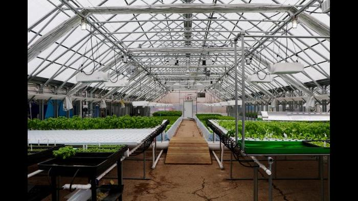 """""""Aquaponics is a model that focuses a little more on the plants than the fish,"""" Kant said. (Evan Garcia)"""