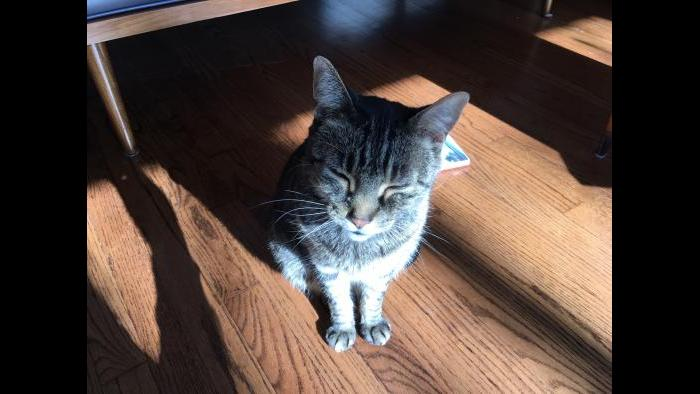Mix enjoys a sun-warmed spot in the apartment on a frigid day. (Submitted by Rebecca Palmore)