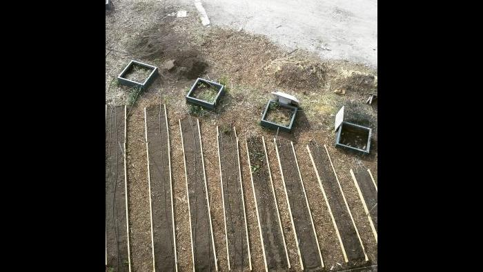 Scheffel's early garden. (Courtesy Jonathan Scheffel)