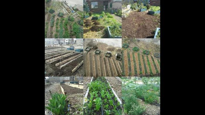 Scheffel's garden haul. (Courtesy Jonathan Scheffel)