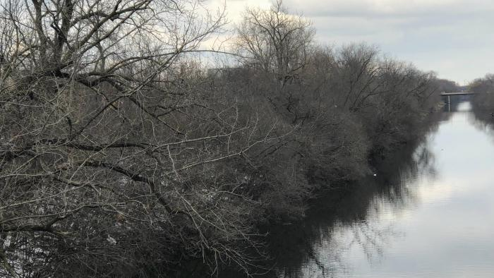 A view of the opposite bank, with its thicket of foliage. (Patty Wetli / WTTW News)